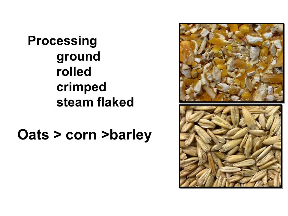 Processing ground rolled crimped steam flaked Oats > corn >barley