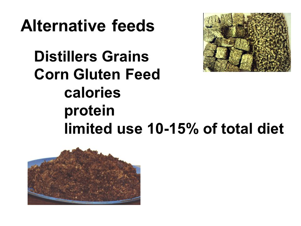 Alternative feeds Distillers Grains Corn Gluten Feed calories protein limited use 10-15% of total diet