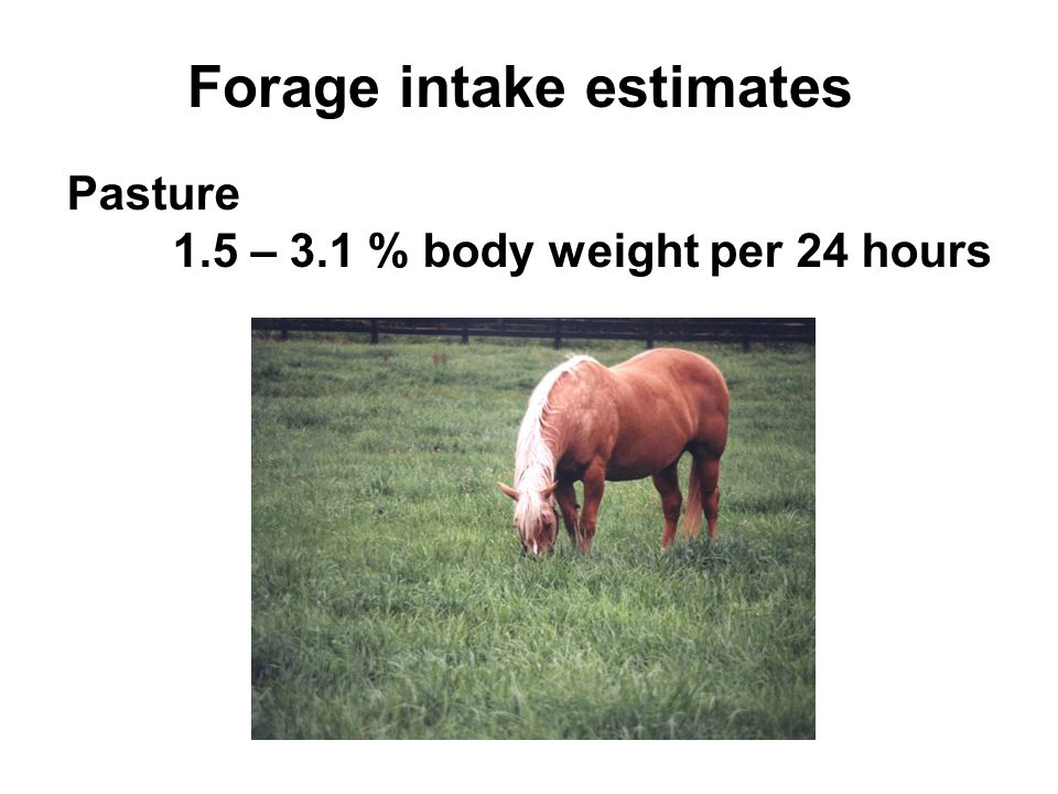 Forage intake estimates Pasture 1.5 – 3.1 % body weight per 24 hours