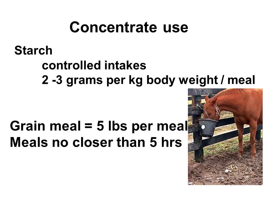 Concentrate use Starch controlled intakes 2 -3 grams per kg body weight / meal Grain meal = 5 lbs per meal Meals no closer than 5 hrs