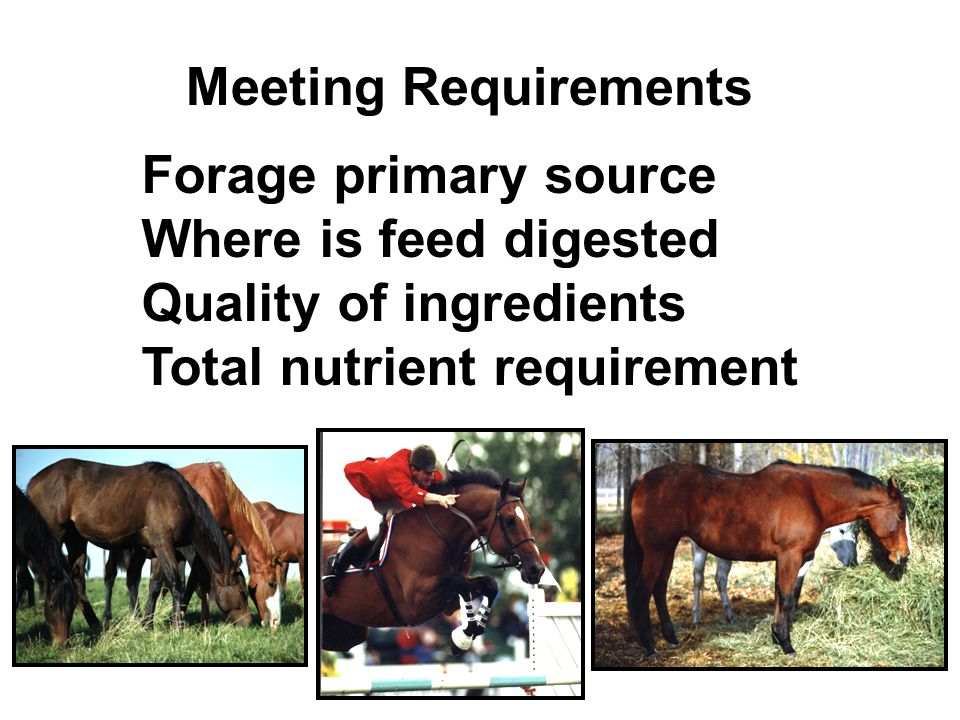 Meeting Requirements Forage primary source Where is feed digested Quality of ingredients Total nutrient requirement