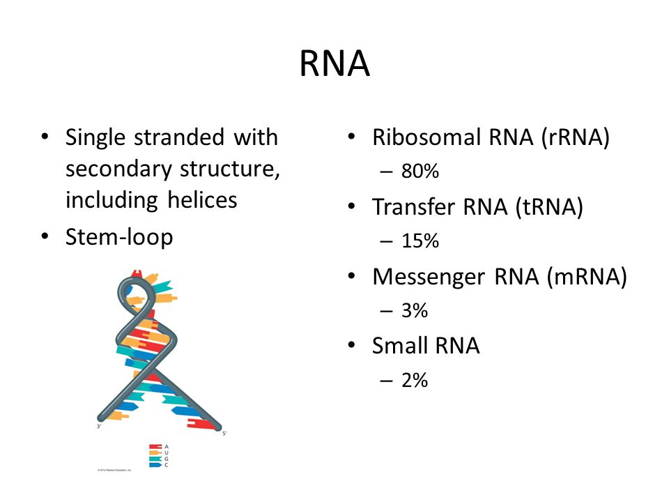 RNA Single stranded with secondary structure, including helices Stem-loop Ribosomal RNA (rRNA) – 80% Transfer RNA (tRNA) – 15% Messenger RNA (mRNA) – 3% Small RNA – 2%