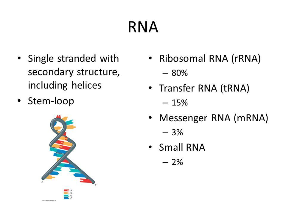 RNA Single stranded with secondary structure, including helices Stem-loop Ribosomal RNA (rRNA) – 80% Transfer RNA (tRNA) – 15% Messenger RNA (mRNA) –