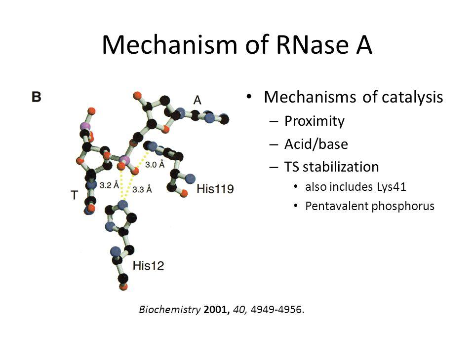 Mechanism of RNase A Mechanisms of catalysis – Proximity – Acid/base – TS stabilization also includes Lys41 Pentavalent phosphorus Biochemistry 2001,