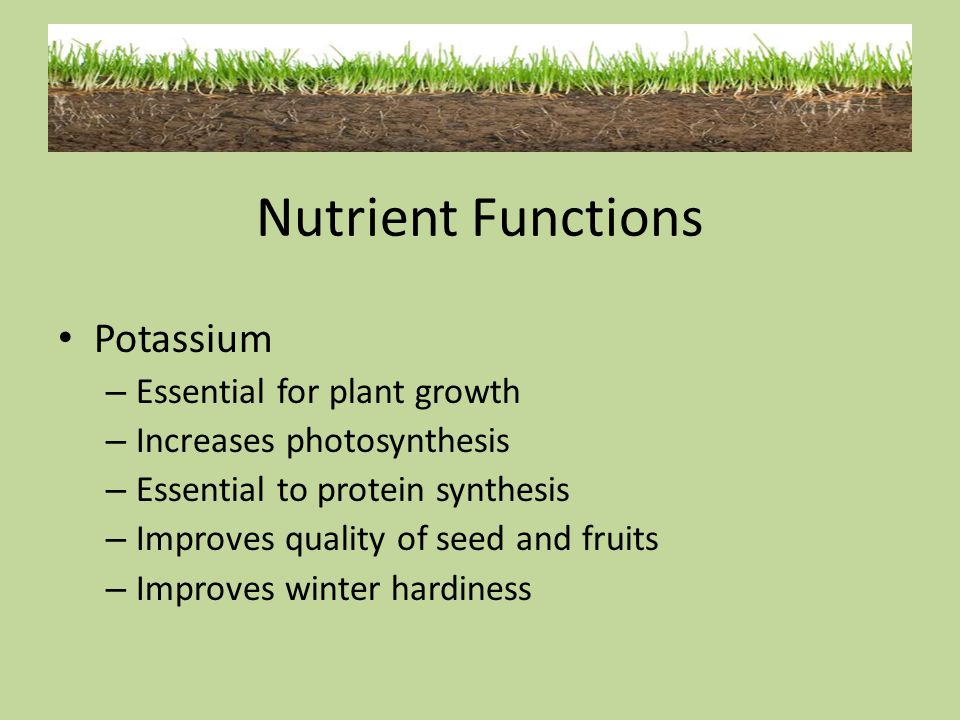 Potassium – Essential for plant growth – Increases photosynthesis – Essential to protein synthesis – Improves quality of seed and fruits – Improves wi