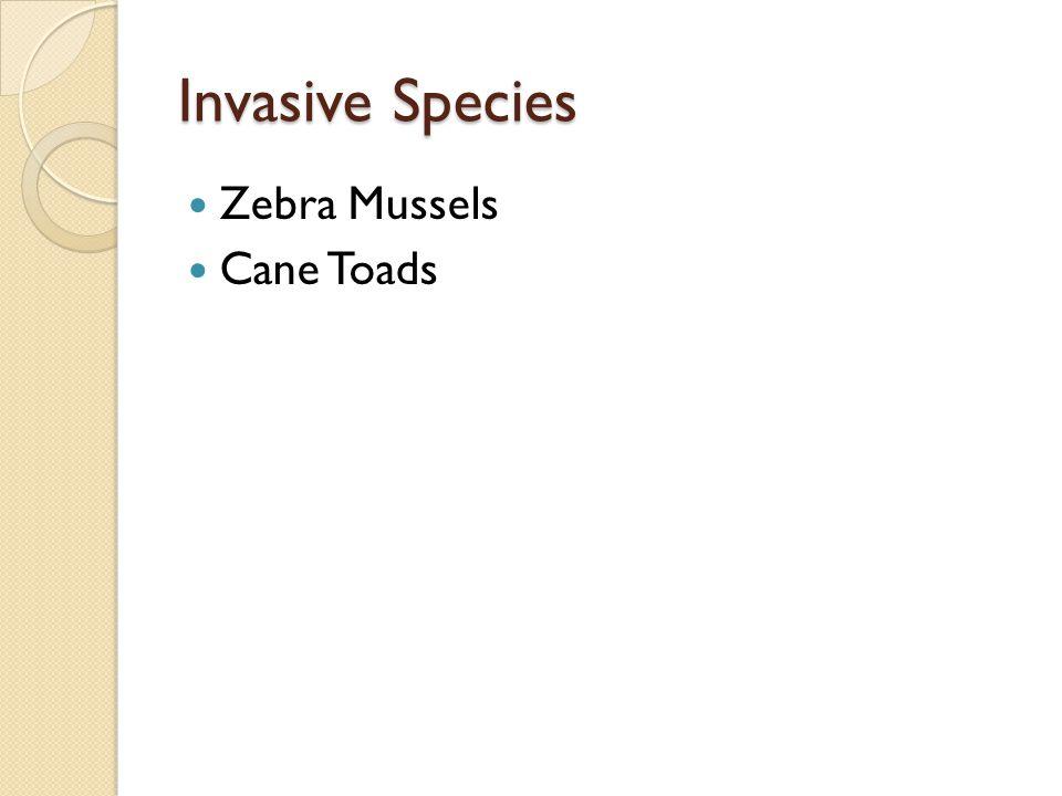 Invasive Species Zebra Mussels Cane Toads