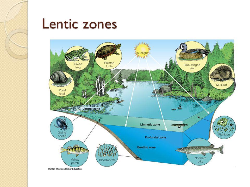 Lentic zones