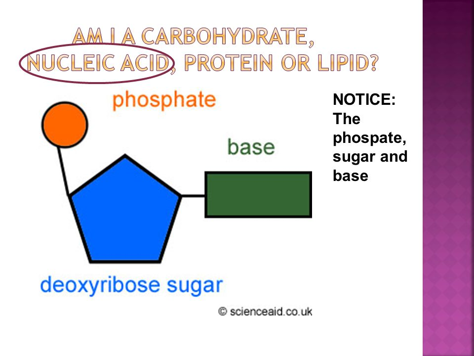 NOTICE: The phospate, sugar and base