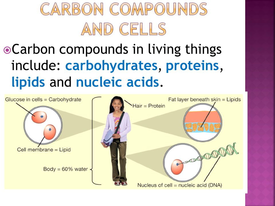  Carbon compounds in living things include: carbohydrates, proteins, lipids and nucleic acids.