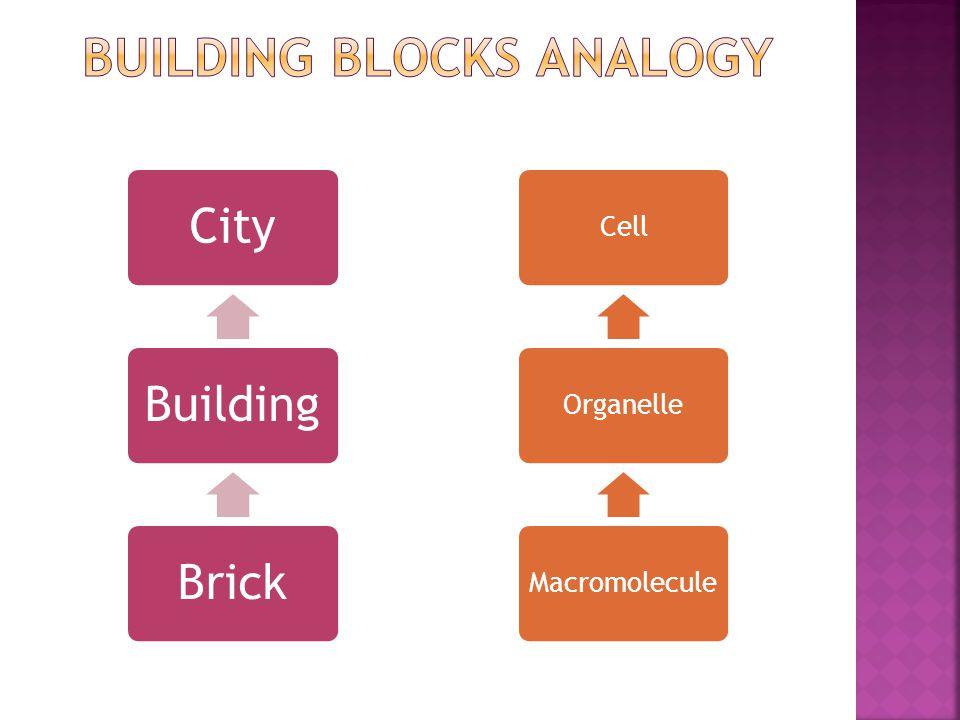 CellOrganelleMacromolecule CityBuildingBrick
