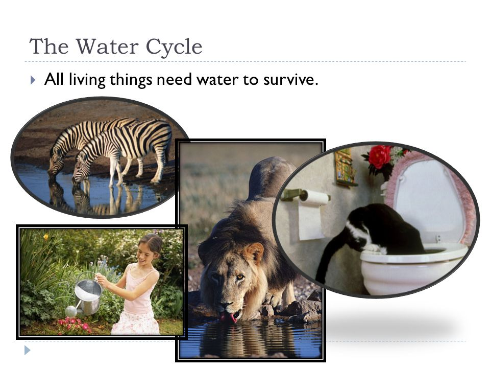 The Water Cycle  All living things need water to survive.