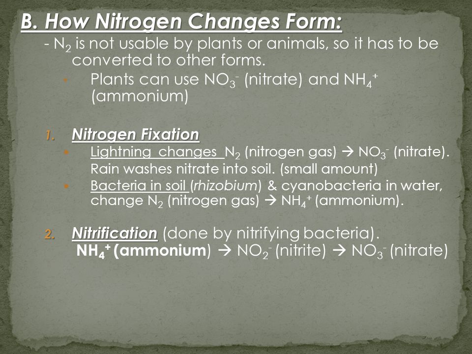 B. How Nitrogen Changes Form: - N 2 is not usable by plants or animals, so it has to be converted to other forms. Plants can use NO 3 - (nitrate) and