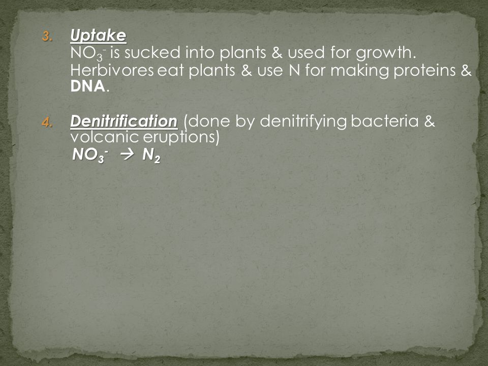 3. Uptake NO 3 - is sucked into plants & used for growth. Herbivores eat plants & use N for making proteins & DNA. 4. Denitrification 4. Denitrificati