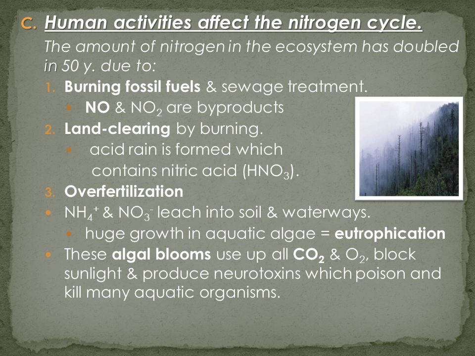 C. Human activities affect the nitrogen cycle. in The amount of nitrogen in the ecosystem has doubled in 50 y. due to: 1. Burning fossil fuels & sewag