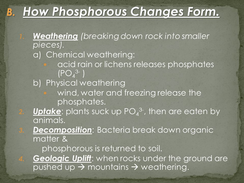 B. How Phosphorous Changes Form. 1. Weathering (breaking down rock into smaller pieces). a) Chemical weathering: acid rain or lichens releases phospha