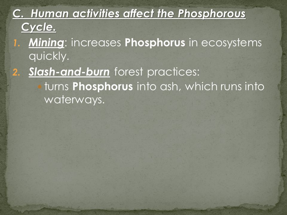 C. Human activities affect the Phosphorous Cycle. 1. Mining : increases Phosphorus in ecosystems quickly. 2. Slash-and-burn forest practices: turns Ph
