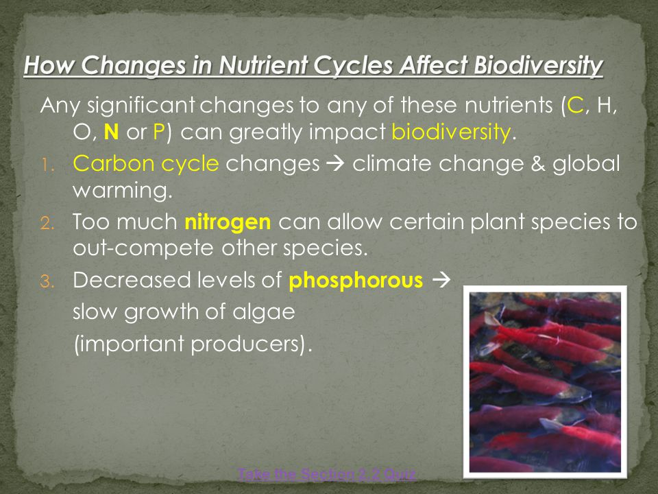 Any significant changes to any of these nutrients (C, H, O, N or P) can greatly impact biodiversity.