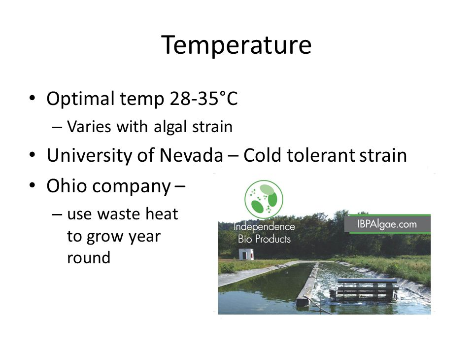 Temperature Optimal temp 28-35°C – Varies with algal strain University of Nevada – Cold tolerant strain Ohio company – – use waste heat to grow year round