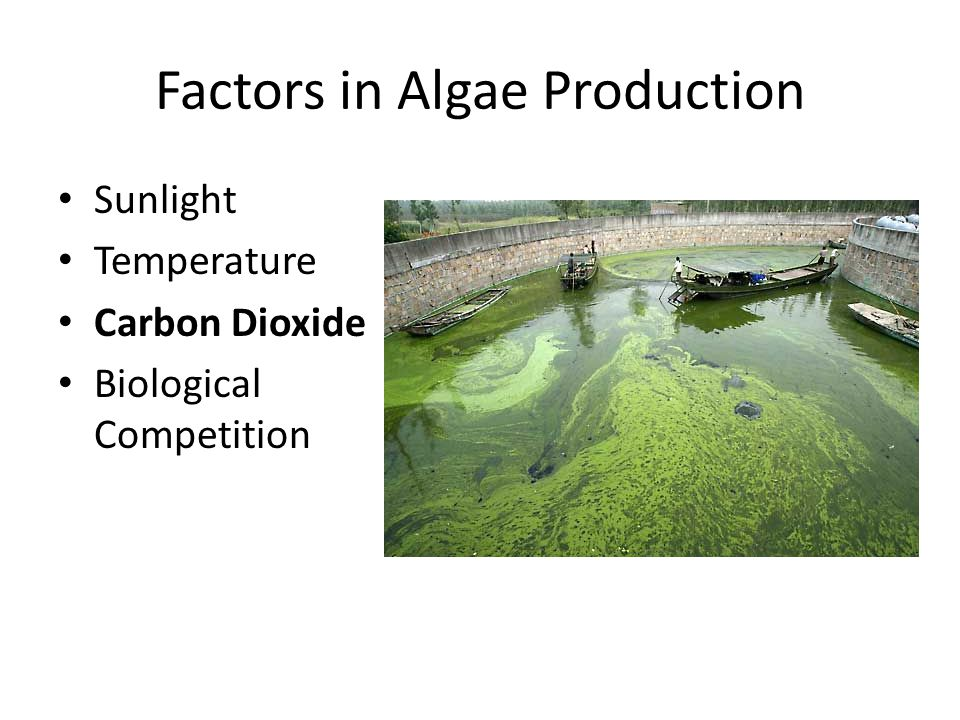 Factors in Algae Production Sunlight Temperature Carbon Dioxide Biological Competition
