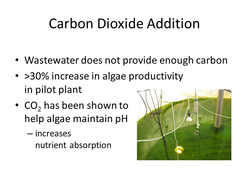 Carbon Dioxide Addition Wastewater does not provide enough carbon >30% increase in algae productivity in pilot plant CO 2 has been shown to help algae maintain pH – increases nutrient absorption
