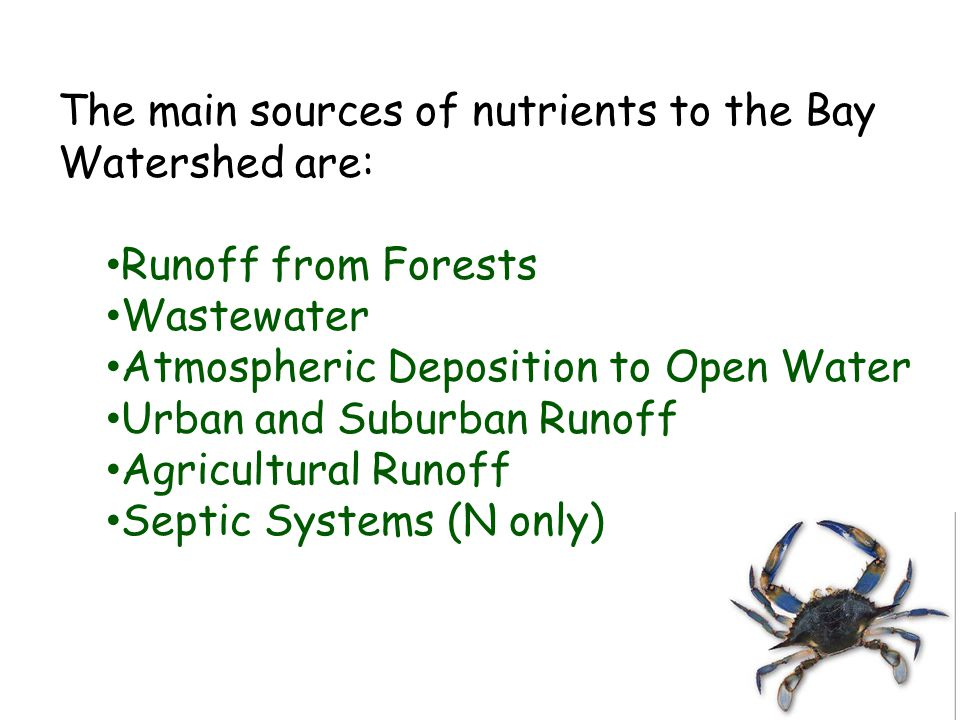 The main sources of nutrients to the Bay Watershed are: Runoff from Forests Wastewater Atmospheric Deposition to Open Water Urban and Suburban Runoff