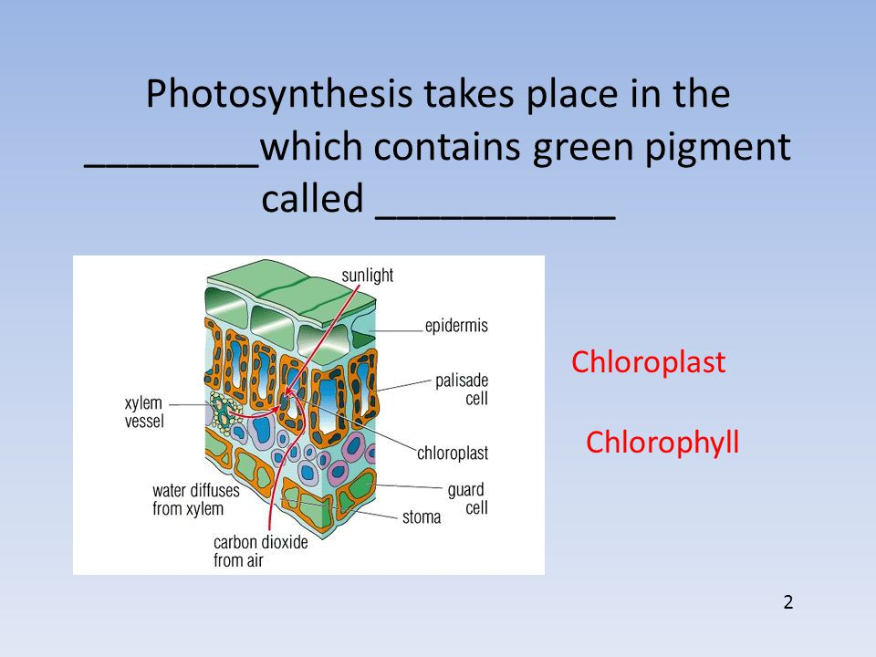 In addition to sunlight, photosynthesis needs _________ and __________ to work Carbon Dioxide H2OH2O 3