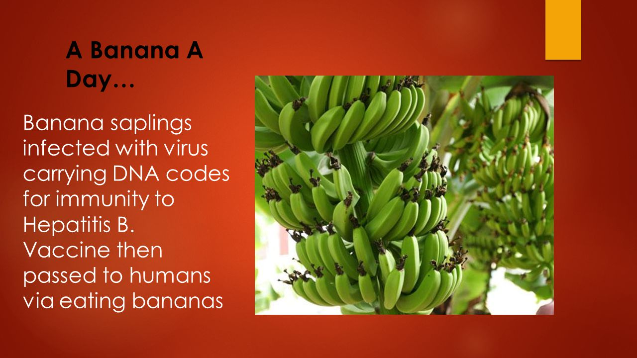 A Banana A Day… Banana saplings infected with virus carrying DNA codes for immunity to Hepatitis B.