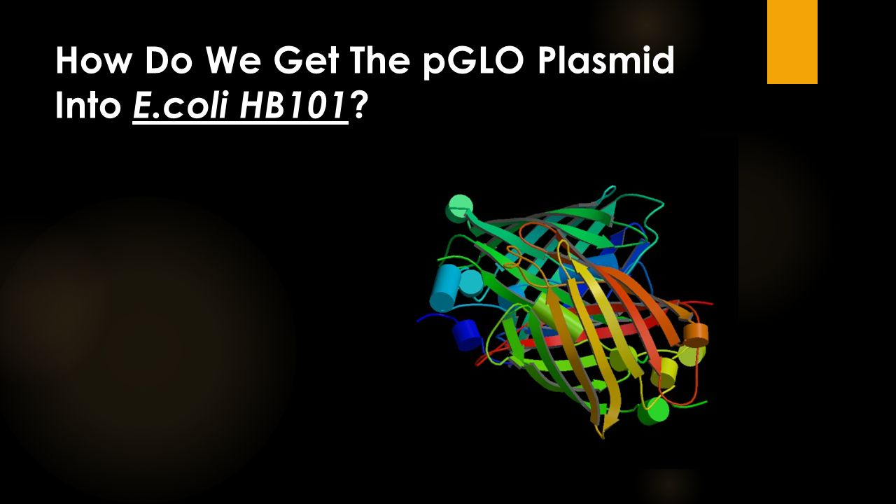 How Do We Get The pGLO Plasmid Into E.coli HB101