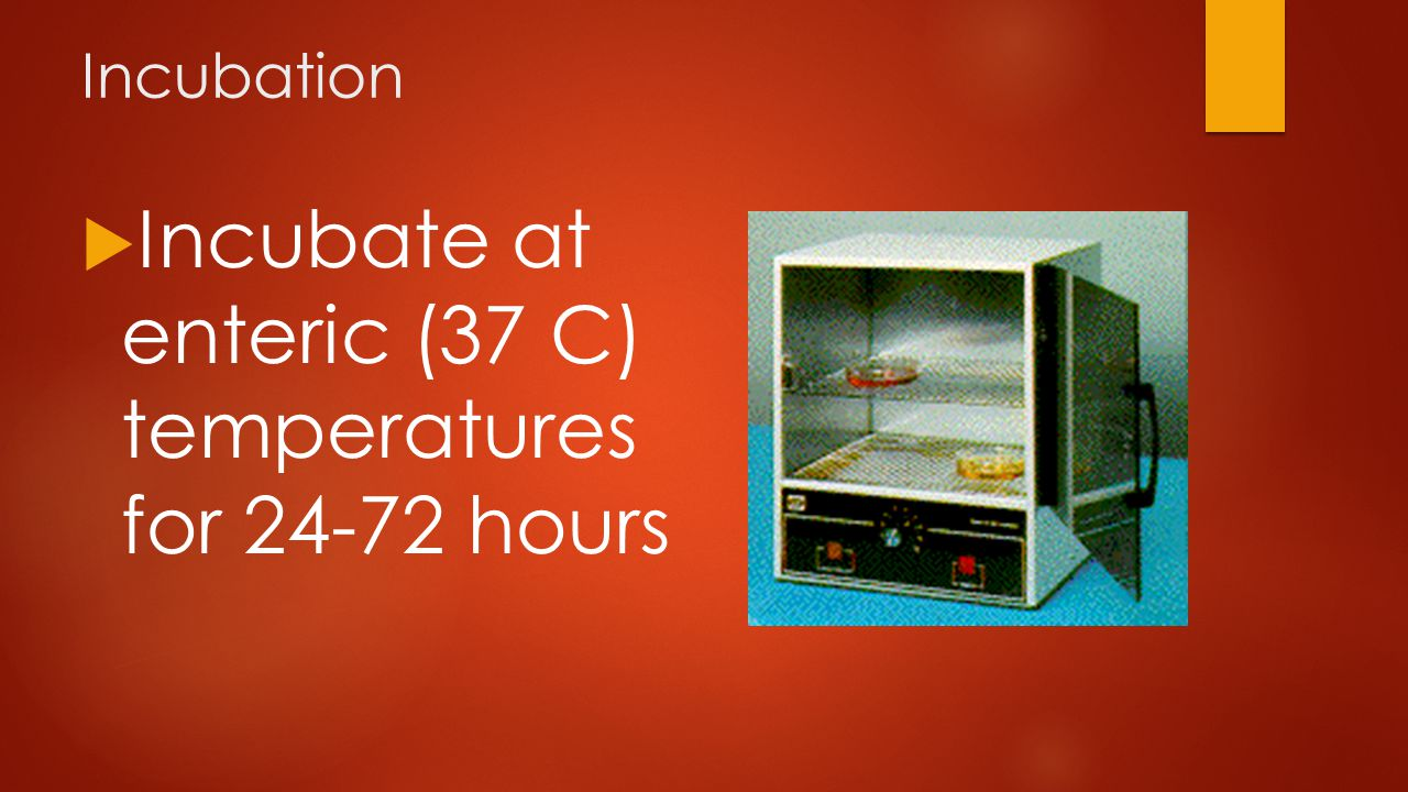 Incubation  Incubate at enteric (37 C) temperatures for 24-72 hours