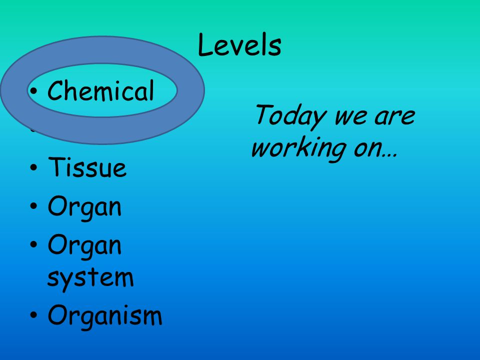 Levels Chemical Cells Tissue Organ Organ system Organism Today we are working on…