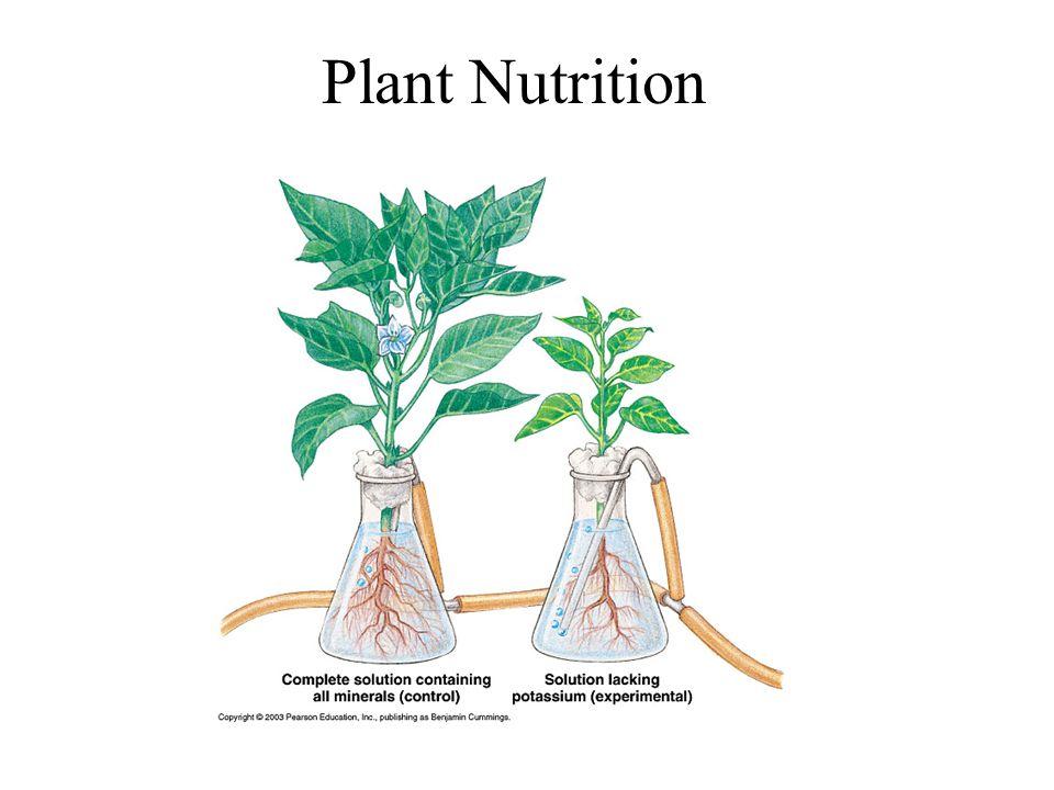 Plant Hormones What is a hormone.