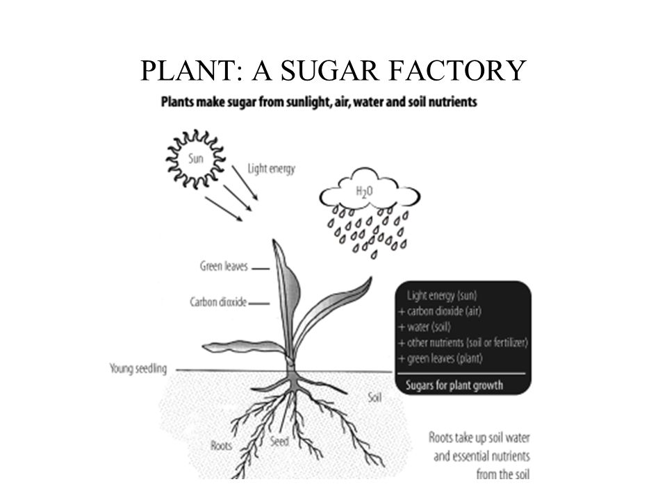 How Plant reacts to Fertilizers
