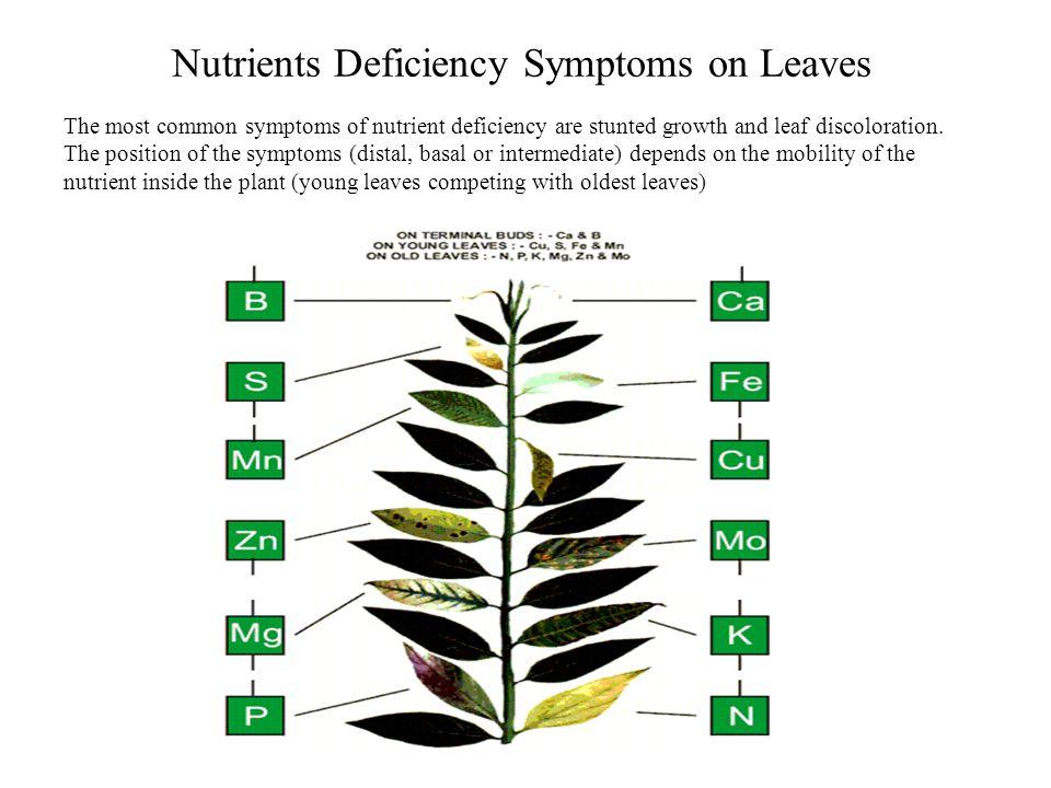 Mobile Nutrients - Identification Key