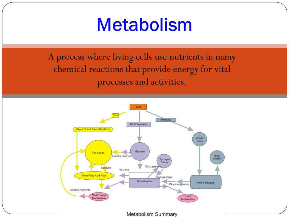 A process where living cells use nutrients in many chemical reactions that provide energy for vital processes and activities. Metabolism