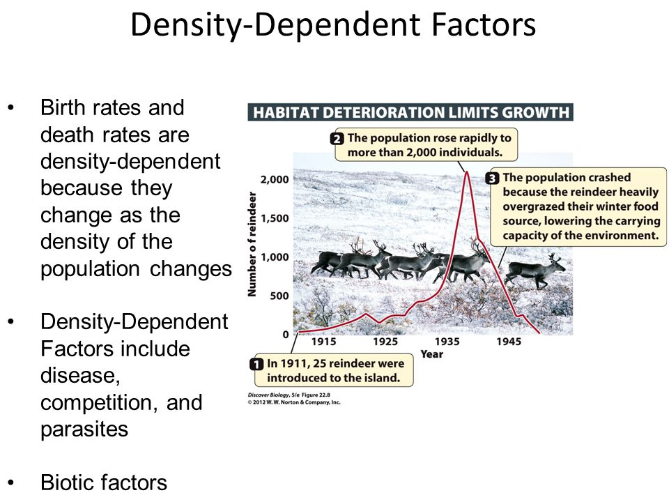 Density-Dependent Factors Birth rates and death rates are density-dependent because they change as the density of the population changes Density-Depen