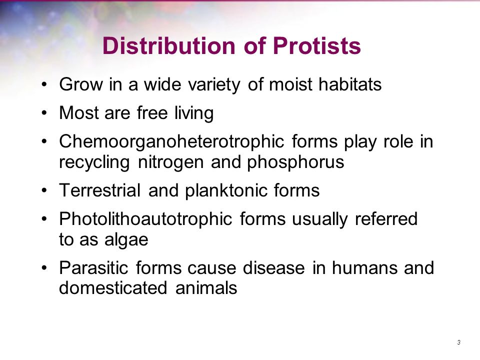 Distribution of Protists Grow in a wide variety of moist habitats Most are free living Chemoorganoheterotrophic forms play role in recycling nitrogen