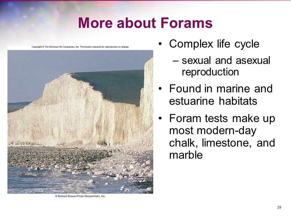 More about Forams Complex life cycle –sexual and asexual reproduction Found in marine and estuarine habitats Foram tests make up most modern-day chalk