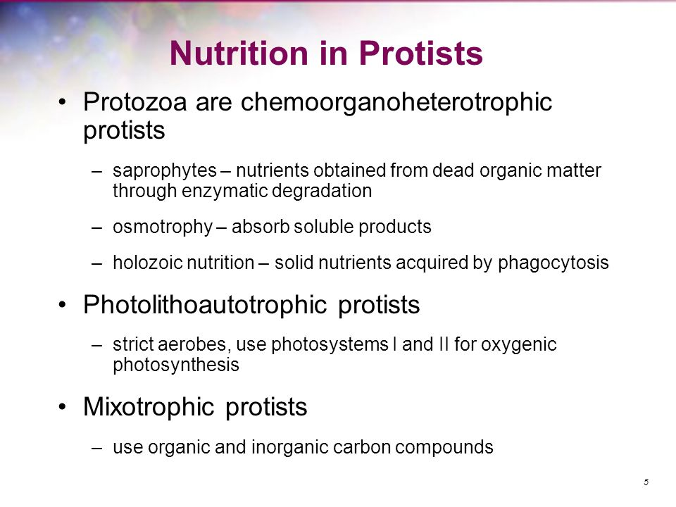 Nutrition in Protists Protozoa are chemoorganoheterotrophic protists –saprophytes – nutrients obtained from dead organic matter through enzymatic degr