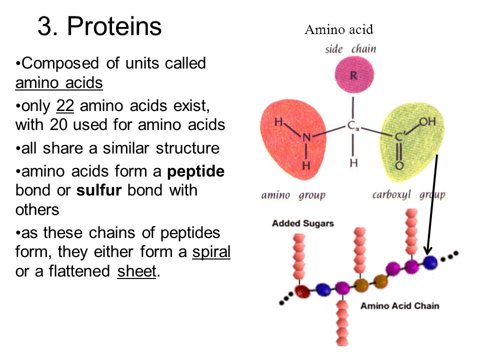 3. Proteins Composed of units called amino acids only 22 amino acids exist, with 20 used for amino acids all share a similar structure amino acids for