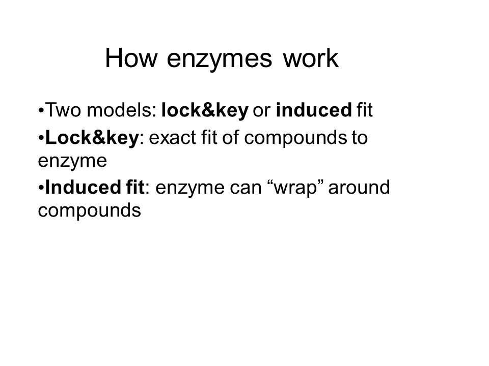 How enzymes work Two models: lock&key or induced fit Lock&key: exact fit of compounds to enzyme Induced fit: enzyme can wrap around compounds
