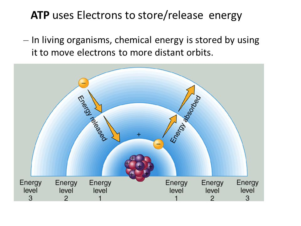 ATP uses Electrons to store/release energy – In living organisms, chemical energy is stored by using it to move electrons to more distant orbits.