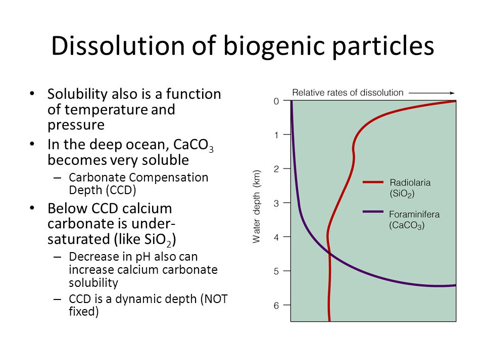 Dissolution of biogenic particles Solubility also is a function of temperature and pressure In the deep ocean, CaCO 3 becomes very soluble – Carbonate Compensation Depth (CCD) Below CCD calcium carbonate is under- saturated (like SiO 2 ) – Decrease in pH also can increase calcium carbonate solubility – CCD is a dynamic depth (NOT fixed)