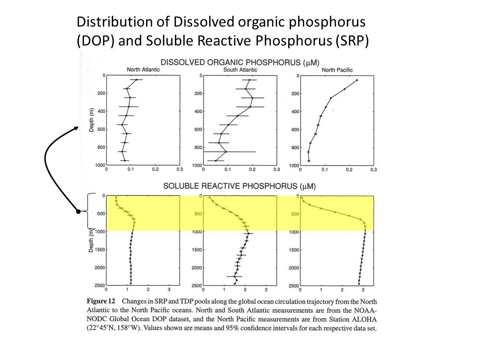 Distribution of Dissolved organic phosphorus (DOP) and Soluble Reactive Phosphorus (SRP)