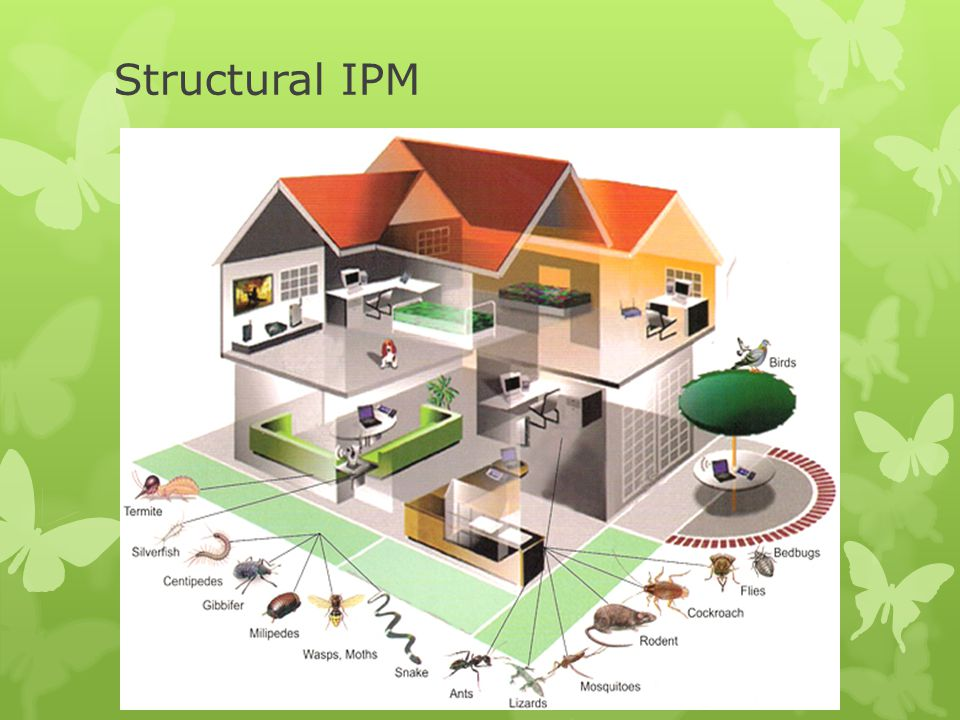 Structural IPM
