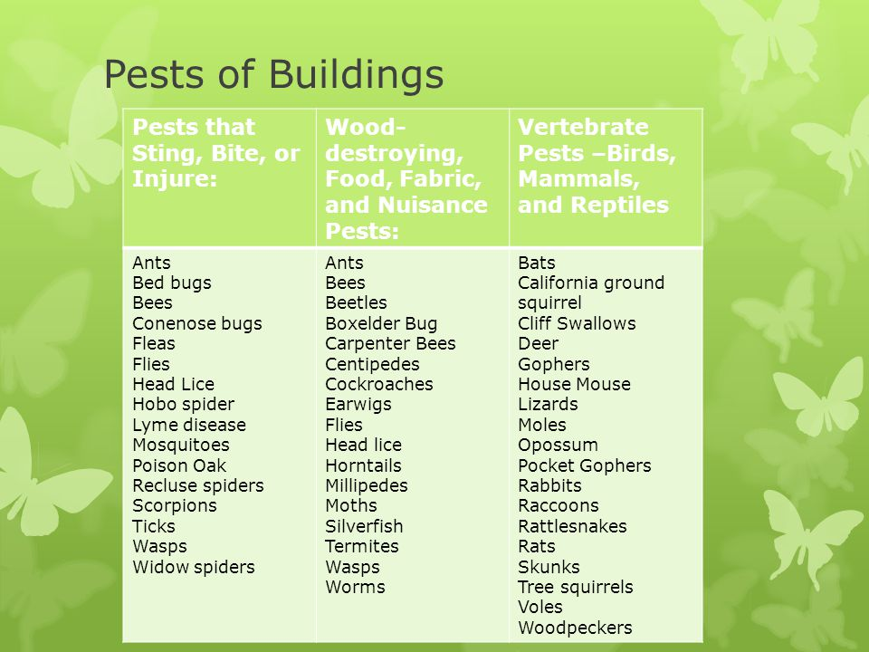 Pests of Buildings Pests that Sting, Bite, or Injure: Wood- destroying, Food, Fabric, and Nuisance Pests: Vertebrate Pests –Birds, Mammals, and Reptiles Ants Bed bugs Bees Conenose bugs Fleas Flies Head Lice Hobo spider Lyme disease Mosquitoes Poison Oak Recluse spiders Scorpions Ticks Wasps Widow spiders Ants Bees Beetles Boxelder Bug Carpenter Bees Centipedes Cockroaches Earwigs Flies Head lice Horntails Millipedes Moths Silverfish Termites Wasps Worms Bats California ground squirrel Cliff Swallows Deer Gophers House Mouse Lizards Moles Opossum Pocket Gophers Rabbits Raccoons Rattlesnakes Rats Skunks Tree squirrels Voles Woodpeckers