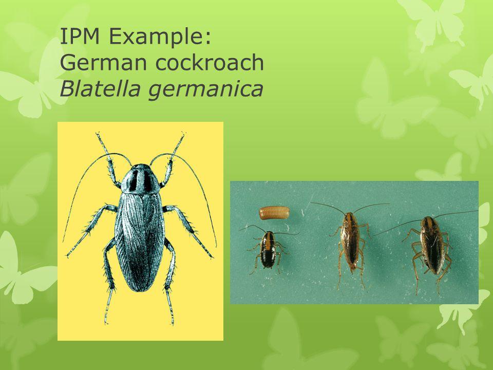 IPM Example: German cockroach Blatella germanica