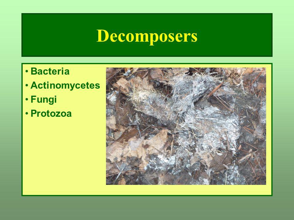 Decomposers Bacteria Actinomycetes Fungi Protozoa