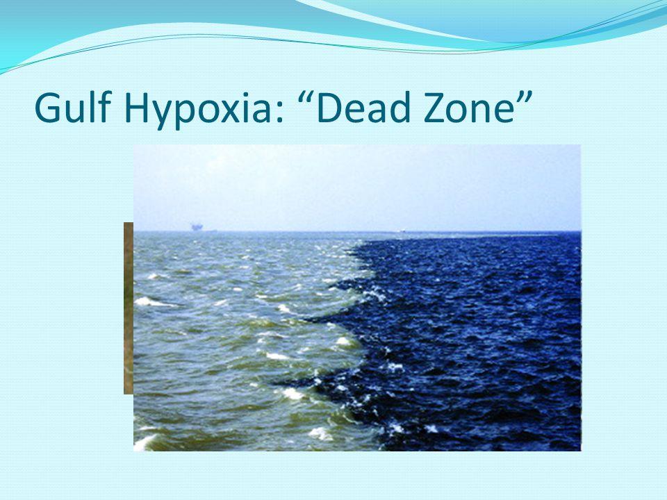 """Gulf Hypoxia: """"Dead Zone"""""""