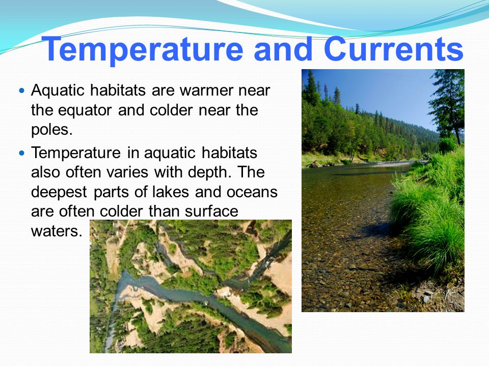 Temperature and Currents Aquatic habitats are warmer near the equator and colder near the poles. Temperature in aquatic habitats also often varies wit