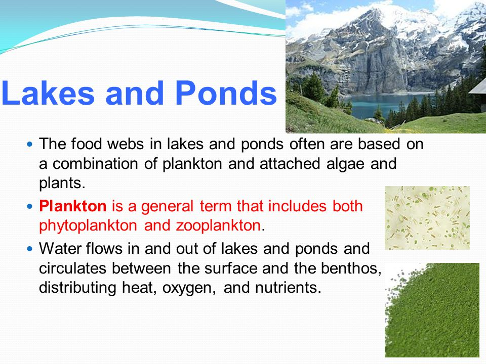 Lakes and Ponds The food webs in lakes and ponds often are based on a combination of plankton and attached algae and plants. Plankton is a general ter